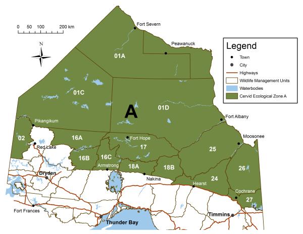 Moose population management  Ontarioca